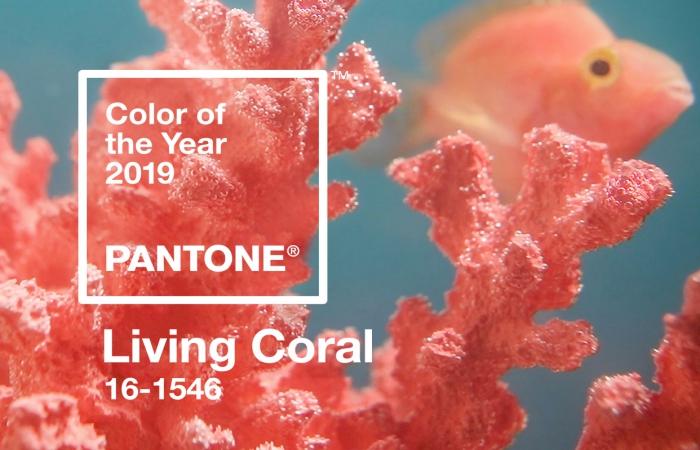 Living Coral é a cor do ano de 2019 segundo a Pantone